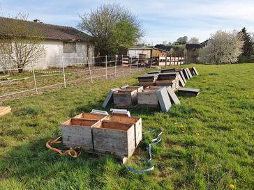 20 Bienenvölker in Much gestohlen Bild: Polizei