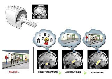Schema zum Gedächtnisabruf: Bei den Bildern handelt es sich um Aufnahmen mit funktioneller Magnetresonanztomographie. Quelle: (c) Grafik: Simon Strangeways (idw)