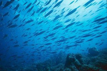 Meere zu düngen, damit Algen mehr CO2 binden, kann das Ökosystem gefährden. Bild: franck MAZEAS / Fotolia.com