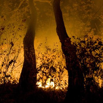 Nicht nur in Spanien richten unkontrollierte Feuer enorme Schäden an. Bild: WWF