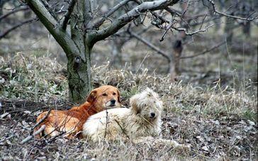 Streunerhunde in Rumänien. Bild: (C) VIER PFOTEN