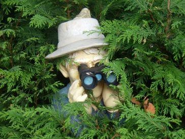 Fernglas, Suche, Spionieren (Symbolbild)