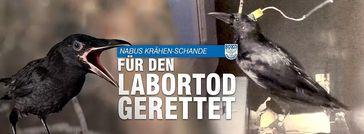 """Bild: Screenshot Internetseite: """"https://www.soko-tierschutz.org/"""" / Eigenes Werk"""