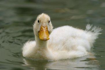 Bild: Tierfotoagentur Ramona Richter
