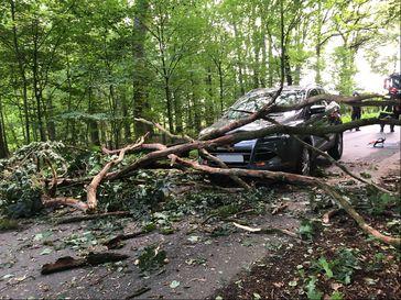 Der Baum stürzte plötzlich auf die Fahrbahn. Bild: Polizei