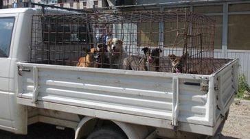 Bild: Bund gegen Missbrauch der Tiere e.V.