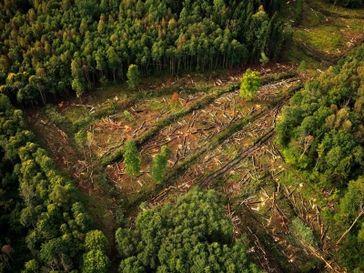 Rodung von Naturschutzgebiet: Wälder werden auch durch die Menschen beispielsweise für neue Windkraftanlagen zerstört. (Symbolbild)