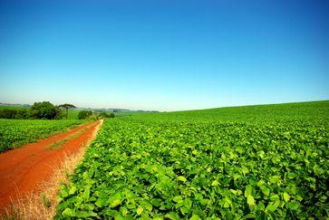 Sojabohnenfeld in Rio Grande do Sul (Brasilien) (Symbolbild)