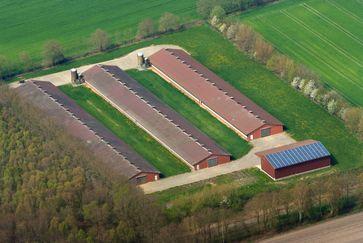 Das Oldenburger Münsterland weist die größte Dichte an Geflügel-, Schweine- und Rinderzuchtbetrieben auf.