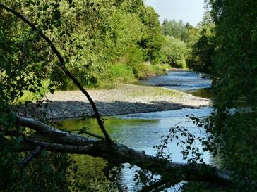 Naturwald mit Fluß (Symbolbild)