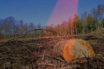 Für 4 Windkraftanlagen werden im Schnitt über 4 Hektar Wald gerodet. Das entspricht etwa 8 Fußballfeldern. Öko?