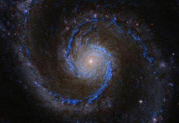 Molekülwolken in der Whirlpool-Galaxie. In blau Wasserstoffmoleküle in M51 (Rohmaterial für die Ster Quelle: Bild: PAWS team/IRAM/NASA HST/T. A. Rector (University of Alaska Anchorage) (idw)