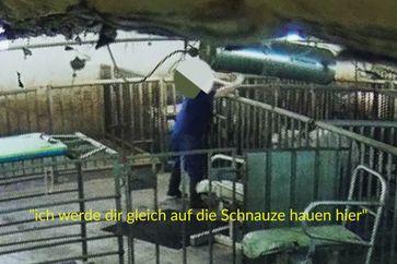 Bild: Deutsches Tierschutzbüro