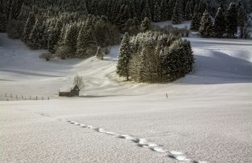 Winter & Schneefall (Symbolbild)