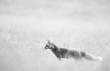 Bild: Wildtierschutz Deutschland e.V. - Suittenpointner Stefan