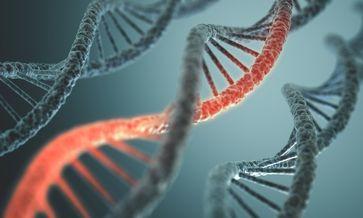Der menschliche Code: DNA-Doppelhelix. Bild: Shutterstock / ktsdesign