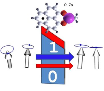 """Organisches Molekül mit Spin: Das Molekül wird magnetisch und Informationen """"0"""" und """"1"""" können über den Spinfiltereffekt ausgelesen werden. Quelle: Foto: Universität Göttingen (idw)"""