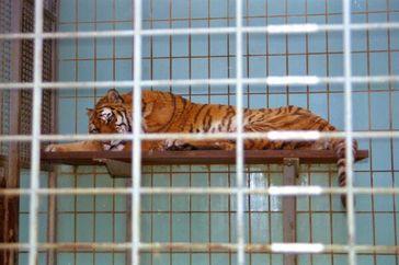 Bild: PETA Deutschland e.V.