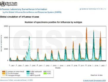 Seit auf COVID19 getestet wird gibtt es weltweit keine Influenza Viren mehr - angeblich!