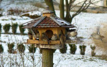 Spatzen an einem Vogelhäuschen