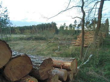 Klassische Rodung in Deutschland: Täglich über 1km² zerstörte Wälder für Neubaugebiete und Industriegebiete.