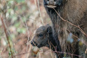 """Bild: """"obs/WWF World Wide Fund For Nature/WWF Deutschland"""""""
