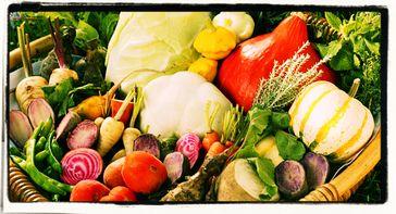 Alte Gemüsesorten: Die Chemische Industrie kämpft mit aller Macht dagegen. Ihre Werkzeuge sind Lobby-Politiker, Staatsverwaltung und Konkurenten Vorort (Symbolbild)