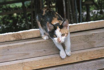 Entfernen sich Katzen zu weit vom Grundstück, gelten sie als wildernde Haustiere. Bild: © VIER PFOTEN
