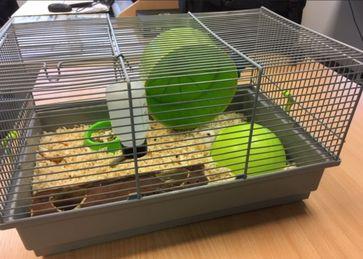 Wem gehört der Hamster? Bild: Polizei