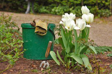 """Jetzt schon starten: Den Garten fit für den Frühling machen! Bild: """"obs/Bund deutscher Baumschulen (BdB) e.V."""""""