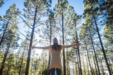 Von Waldspaziergängen profitieren Körper und Seele. Bild: Apotheken Umschau ots