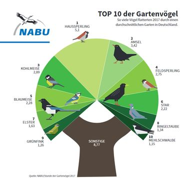 Top 10 der Gartenvögel