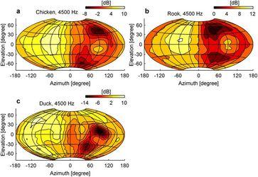 Die Bilder zeigen, wie bei Huhn, Ente und Krähe die Lautstärke am rechten Ohr bei Geräuschen aus verschiedenen Richtungen variiert. Quelle: Schnyder HA, Vanderelst D, Bartenstein S, Firzlaff U, Luksch H (2014) The Avian Head Induces Cues for Sound Localization in Elevation. PLoS ONE 9(11): e112178. doi:10.1371/journal.pone.0112178 (idw)