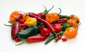 """Chili-Vielfalt aus dem eigenen Garten Bild: """"obs/Suncoast Peppers GmbH/Harald Zoschke"""""""