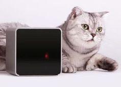 Petcube mit Katze: keine einsamen Haustiere mehr als Ziel. Bild: petcube.net