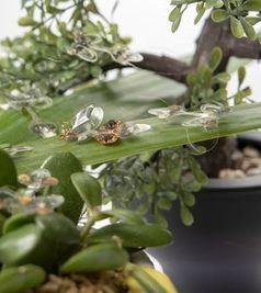 Künstliche Insekten der EPFL auf einem natürlichem Parcours.