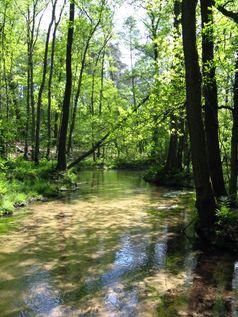 Sandgeprägter Tieflandbach: Der Furlbach als Referenzgewässer dieses Fließgewässertyps