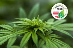 Hanf - Arzneipflanze 2018