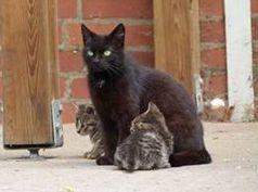 Eine Katze und ihre Nachkommen können in nur fünf Jahren theoretisch 12.680 Babys bekommen. Bild:  VIER PFOTEN