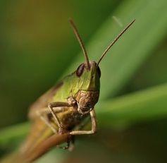 Aufmerksames Insekt: Vorbild für die Technik. Bild:: Luise, pixelio.de