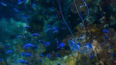 Neuer Roboter-Aal: Er stört Meeresbewohner in Umgebung nicht. Bild: ucsd.edu