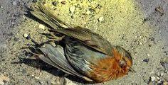 Vogeljagd: Einer von 53.000.000 pro Jahr... (Symbolbild)