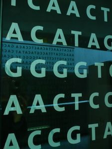 Gentafel: europäische Wurzeln identifiziert. Bild: pixelio.de, Gabi Schoenemann
