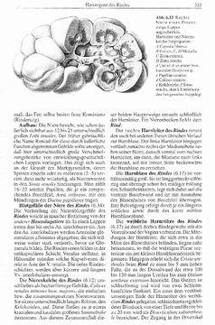 Die Abbildung 1 zeigt, wie eine gesunde Niere aussehen sollte. Das Bild stammt aus dem Lehrbuch der Anatomie aus den 1960 Jahren.