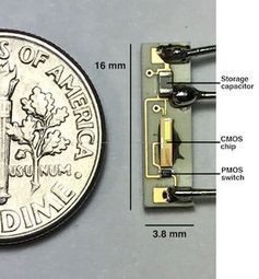 Kleiner als eine Münze: der kabellose Schrittmacher. Bild: rice.edu