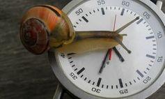 Schnecke auf der Uhr: Lange Ladezeit frustriert. Bild: pixelio.de/D. Schneider