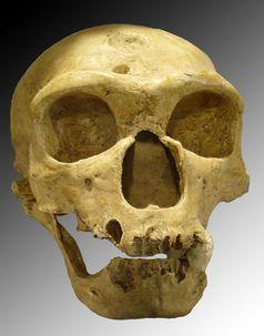 Schädel eines Neandertalers (1908 im französischen La Chapelle-aux-Saints entdeckt)