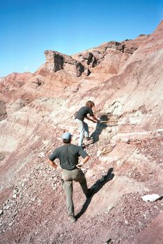 Grabung im Junggar-Becken in Nordwest-China im Jahr 2001: Fundstelle des Dinosaurierknochens mit Bissspuren. Quelle: Foto: Andreas Matzke (idw)