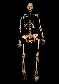 Skelett eines Homo heidelbergensis aus Sima de los Huesos, einer einzigartigen Höhle in Nordspanien. Quelle: Javier Trueba, Madrid Scientific Films (idw)