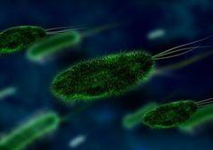 Bakterien: Erreger kommunizieren über Moleküle.